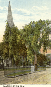 Washington Elm postcard