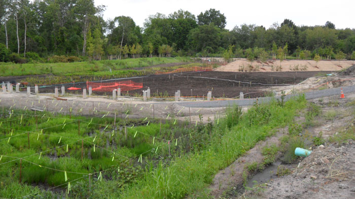 Alewife Restored Wetland (Aug 2012)